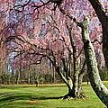 Shades Of Spring by Byron Varvarigos