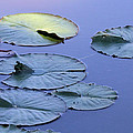 Shades Of Tranquility by Doris Potter