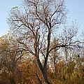 Shadow Cliff Tree by Karen  W Meyer
