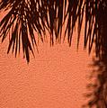 Shadows Of A Palm by Carolyn Marshall