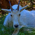 Shady Goat by James Anderson