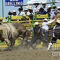 Rodeo Shaking It Up by Bob Christopher