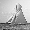 Shamrock II At Outer Mark 1901 Bw by Padre Art