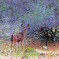 Shasta County Deer  by Joyce Dickens
