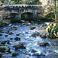 Shaugh Prior Bridge by Ron Telford