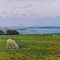 Sheep Grazing by Viggo Johansen