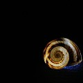 Shell 4 by Mark Fuller