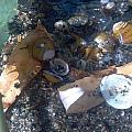 Shell Beach by Staci Black