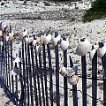 Shell-decorated Fence by Carla Parris