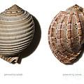 Shell Line Systems by Raul Gonzalez Perez