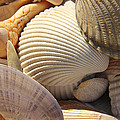 Shells 1 by Mike McGlothlen