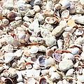 Shells by Carol Groenen