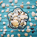 Shells In Bowl by Julia Davila-Lampe