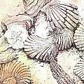 Shells by Lizi Beard-Ward