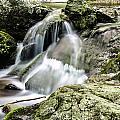 Shenandoah Stream by Shane York