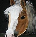 Shetland Pony by Michele Turney