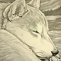 Shiba Inu by Kim Hunter