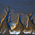 Shifting Sands by Pamela Patch