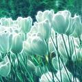 Shimmering Tulips by Georgiana Romanovna