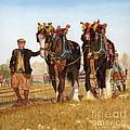 Shire Horses by Michael Dermody