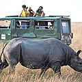 Shooting Rhinos by Carl Purcell