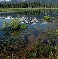 Shore Reflections Of Mt Tallac by LeeAnn McLaneGoetz McLaneGoetzStudioLLCcom