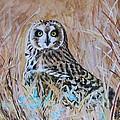 Short-eared Owl by Karen Layne