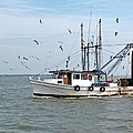 Shrimp Boat And Gulls by Robert Brown