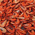 Shrimp by Dave Mills
