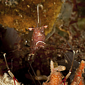 Shrimp With Legs And Claws Spread Wide by Mathieu Meur