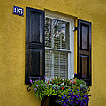 Shutters And Window Boxes by Sandra Anderson