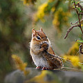 Shy Little Chipmunk by Susan Capuano