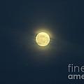 Shy Moon by Alexandra Bento