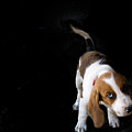 Shy Puppy by by Eudald Castells