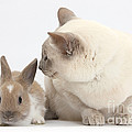 Siamese-cross Cat, Isaac, And Baby by Mark Taylor