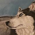 Siberian Husky by Robert Decker