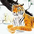 Siberian Tiger by Timothy Nieberding