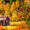 Sierra Nevada Aspen Fall Colors With Rustic Barn by Scott McGuire