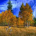 Sierra Nevada Fall Colors Lake Tahoe by Scott McGuire