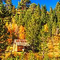 Sierra Nevada Rustic Americana Barn With Aspen Fall Color by Scott McGuire