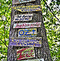 Signs On A Tree by Susan Leggett