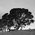 Silhouette Of A Tree With Sheep by David DuChemin