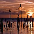 Silhouette Of Seagulls On Posts In Sea by Axiom Photographic