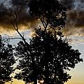 Silhouette Sunset by Roderick Bley
