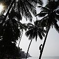 Silhouetted Man Climbing A Palm Tree To by Axiom Photographic