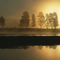 Silhouetted Trees Along The Yellowstone by Tom Murphy
