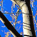 Silk Tree by Diane montana Jansson