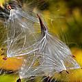Silky Autumn by Susan Leggett