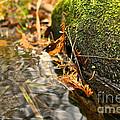 Silky Water by Susan Herber