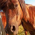 Silly Horse by Rachel Duchesne